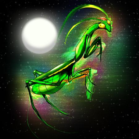 praying mantis: Praying Mantis Doodle Art