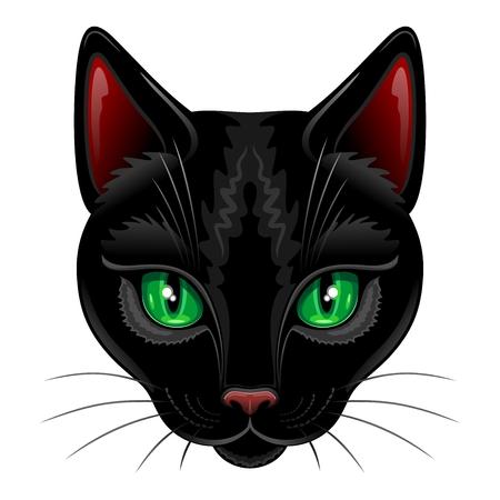 Black Cat Portrait on White