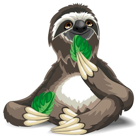 oso perezoso: La pereza de la historieta linda que come una hoja Vectores