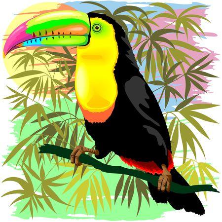 Toucan Wild Bird