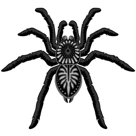 Spider Tarantula Tattoo Style Black and White