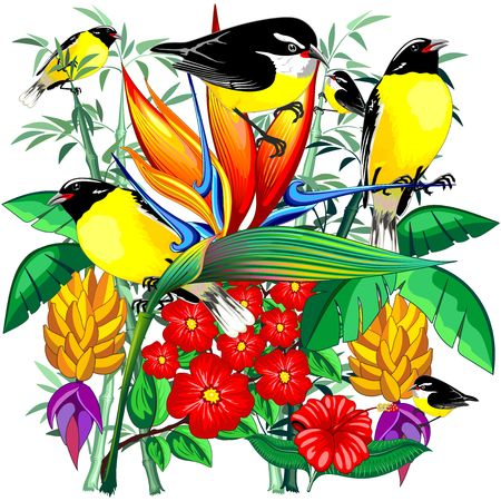 Birds Cute Exotic Bananaquit on Tropical Nature