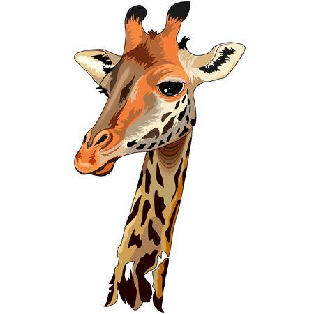 Giraffe Wild African Animal Portrait Illustration