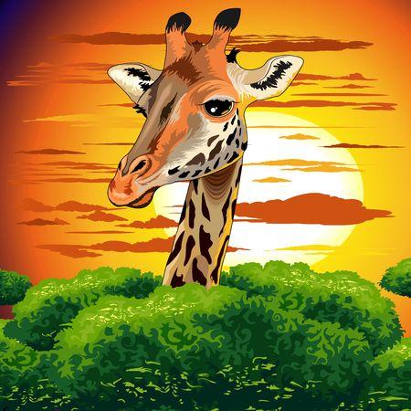 Giraffe on Wild African Savanna Sunset Illustration
