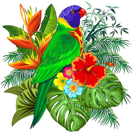 Rainbow Lorikeet Exotic Colorful Parrot Bird Vector Illustration