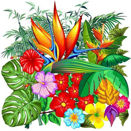 Tropical Nature Botanical Garden Vector Illustration Illustration