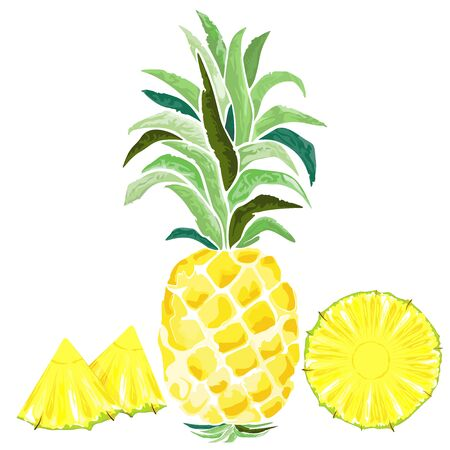 Pineapple and Watercolor Slices Style Vector illustration isolated on white