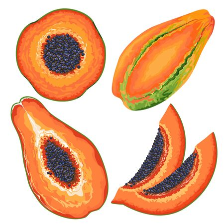 Papaya Slices and Entire Vector Illustration isolated on white