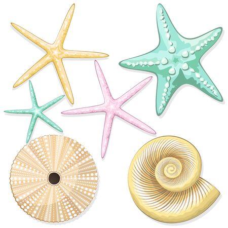 Seashells, starfish, retro urchins sea style vector elements isolated on white