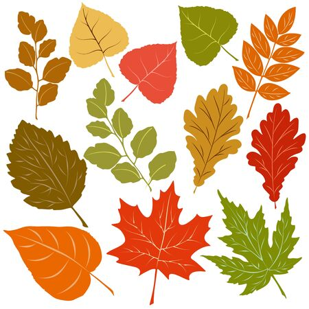 Autumn Leaves Fall Season Vector Elements isolated on white
