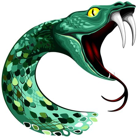 Snake Head with big fangs on open mouth vector illustration isolated on white