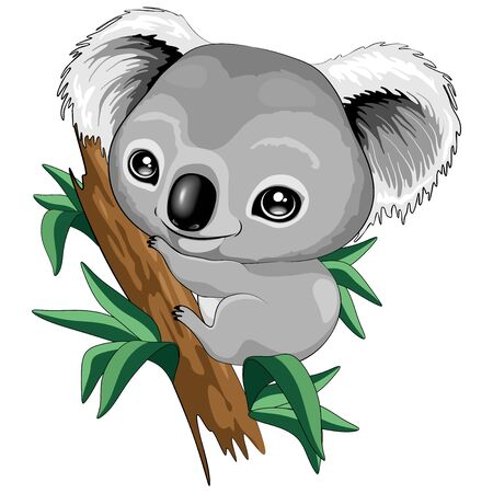 Koala Baby Cute Cartoon Character Vector Illustration Illustration