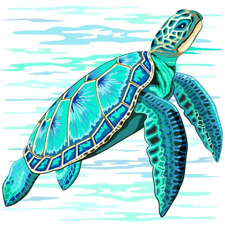 Sea Turtle Turquoise Oceanlife Vector Art