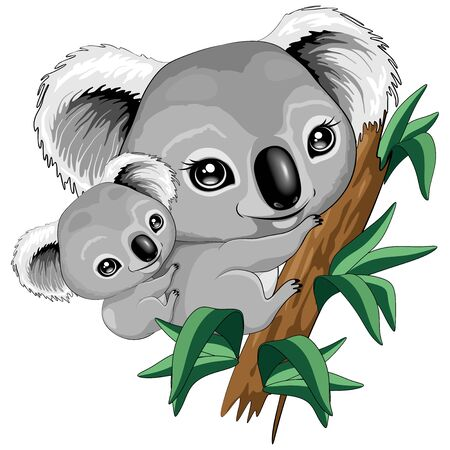 Koala Baby and Mother on Eucalypt Branch Cute Characters Vector Illustration Illustration