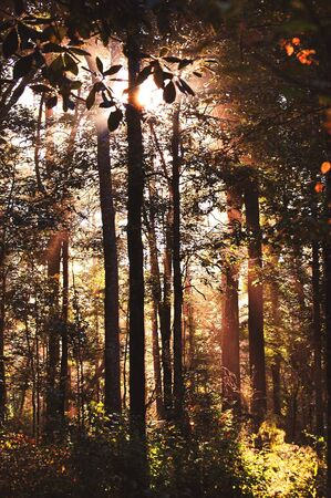 Misty sunrise in the forest. Stock Photo