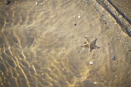 seastar: seastar in the water