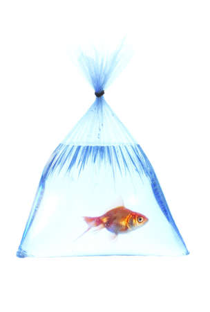 High resolution fish in a platic bag on white background