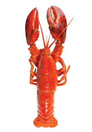 high resolution lobster on white background