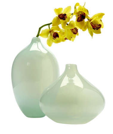 vases with flowers isolated photo