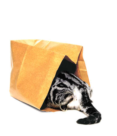 animals, kitten, cat going into paper bag