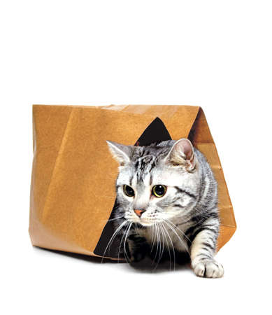 animals, letting the cat out of the bag, kitten Stock Photo
