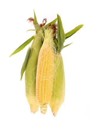 Fresh raw corn on a white background. Stock Photo - 5672872
