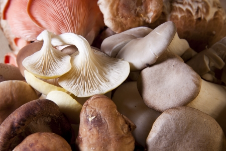Close-up of exotic mushrooms as a food background.  photo