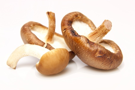Three different types of mushrooms on a white background.  Stock Photo