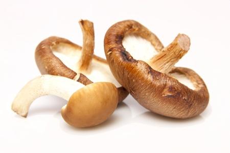 seta: Tres diferentes tipos de hongos sobre un fondo blanco.