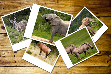 photo background: Collage of photos of African wild animals.