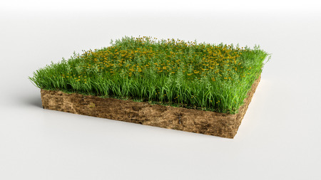 Green Grass Land Piece with flowers Isolated on White Background. 3D Illustration Stockfoto