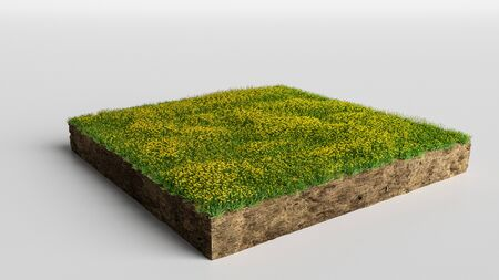 3D Illustration Square of grass field with flowers on white background Stock Photo