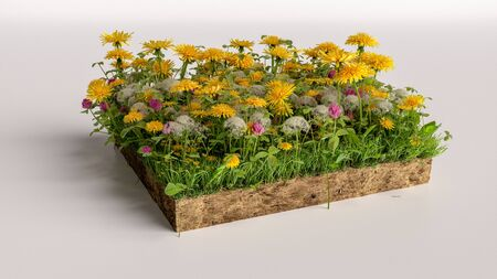 3D cubical flowers grass land with soil geology cross section, 3D Illustration ground ecology Imagens
