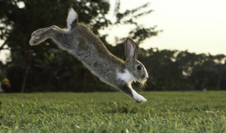 Little cute rabbit bunny running on the field in summer.