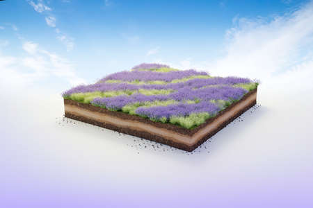 3D cubical garden grass land with lavender, soil geology cross section, 3D Illustration ground ecology isolated on blue sky 版權商用圖片