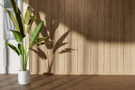 Plants decoration with shadow on empty room interior with wooden floor