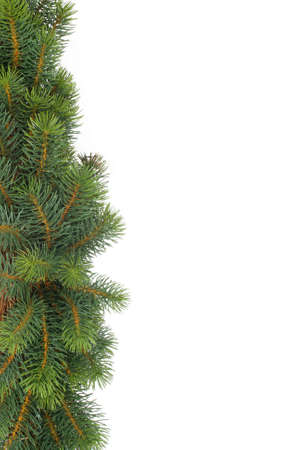 fir tree natural background - christmas Stock Photo