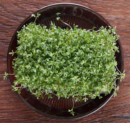 Garden cress on wooden background. Pepper grass