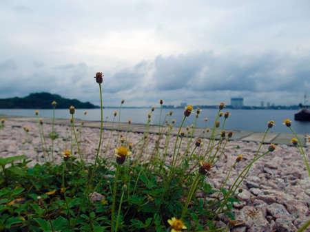 scenary: Singapore Kranji Reservoir landscape with wild flowers
