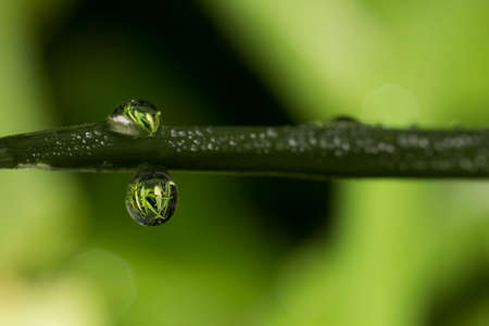 dews: Water dews forming on leaf Stock Photo