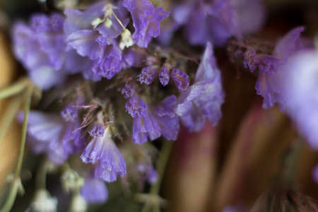 lavender coloured: lavender coloured flowers