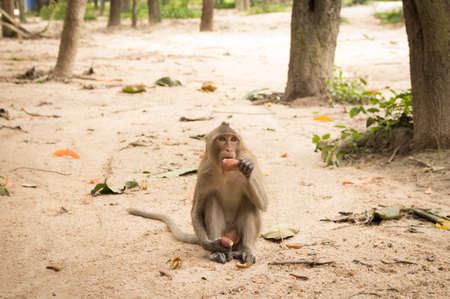 サツマイモを食べて猿