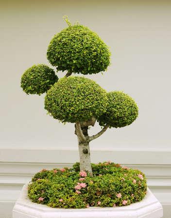 fancy shaped decorative tree Stock Photo - 10129573