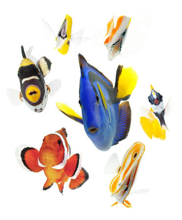 marine fish isolated on white background photo