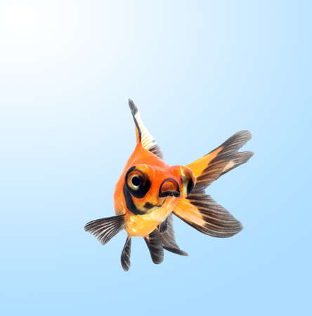 goldfish on blue background photo