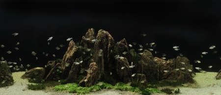 aquarium eau douce: belle aquarium plant� d'eau douce tropicale