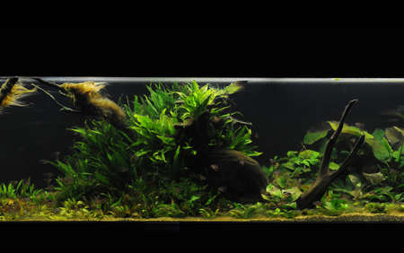 beautiful planted tropical freshwater aquarium photo