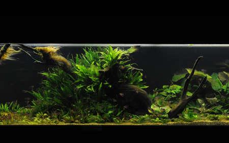 takashi: beautiful planted tropical freshwater aquarium Stock Photo