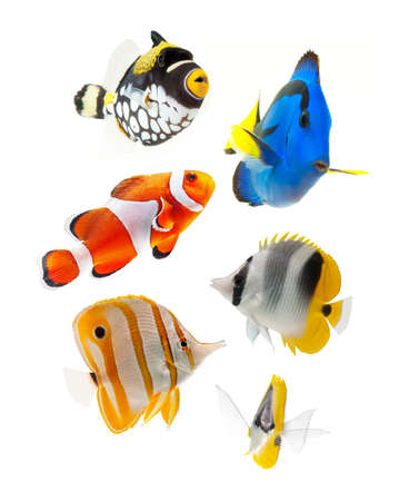 fish, reef fish, marine fish party isolated on white background photo