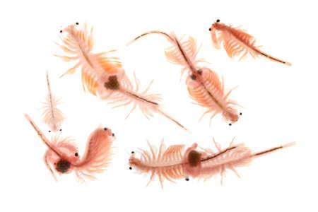 plancton: artemia plancton aisladas sobre fondo blanco